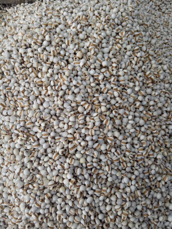 贵州苡米薏米500g